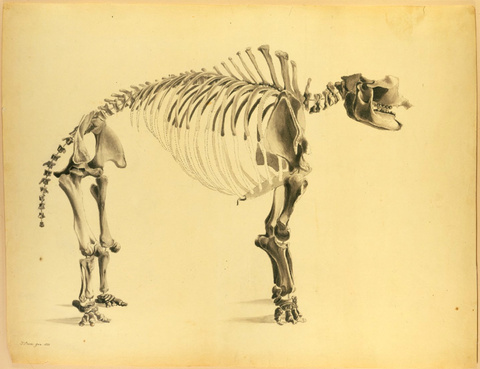 The Gigantic Mastodon, 1821